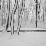 feerie,alb,negru,fotografie, Feerie în alb și negru, Cufarul cu Amintiri, Cufarul cu Amintiri